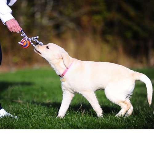 Chuckit Ultra Toss | Lichtgevend hondenspeelgoed