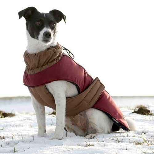 Hondenjas Royal Pets