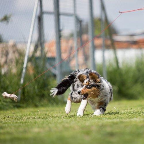 Telescopische speelhengel | Leuk voor je hond