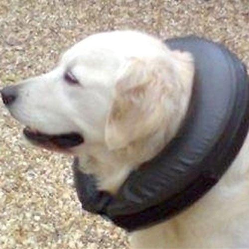 Opblaasbare hondenkraag Comfy Collar | Gemaakt van krabvast kunstleder