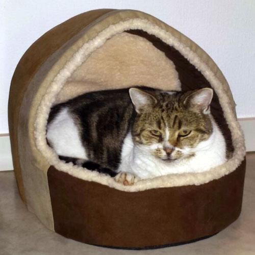 Manden en kussens | De kat Sjaak is tevreden met zijn nieuwe mand
