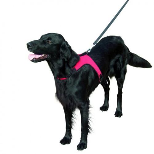 Honden Sportharnas