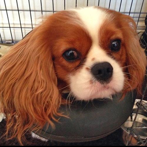 Hondenkraag | Comfy Collar | Opblaasbare kraag voor honden