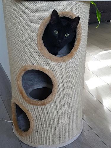 Krabton bubba   Tevreden kat met zijn krabton bubba beige