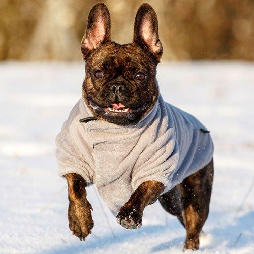 Hondenkleding | Hondenjas bern