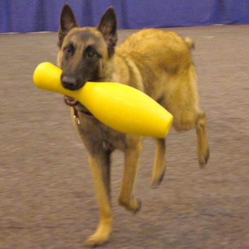 Hondenspeelgoed | Tuggo Shake N Fetch getest in dierentuinen