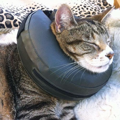 Hondenkraag | Comfy Collar | Opblaasbare kraag voor katten