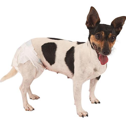 Hondenkleding | Hondenluiers
