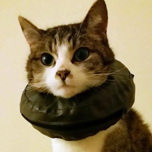 Hondenkraag | Comfy Collar | Opblaasbare kraag voor kat en hond