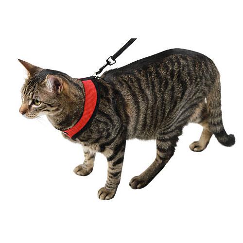 Kattenharnas Active Rood