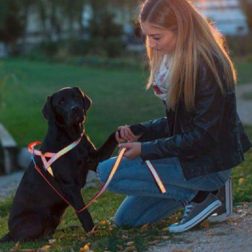 Hondenriemen | Trainingslijn Norwegian | Sterk reflecterend
