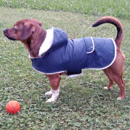 Hondenkleding | Hondenjas Teddy met reflectiestrepen