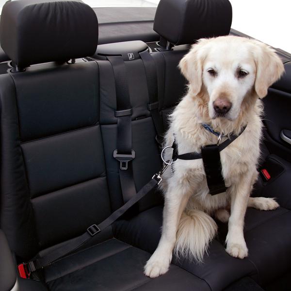 Speciaal verbindingsstuk voor de veiligheidsgordel van uw hond