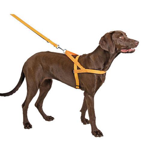 Reflecterend Hondentuigje Norwegian hond