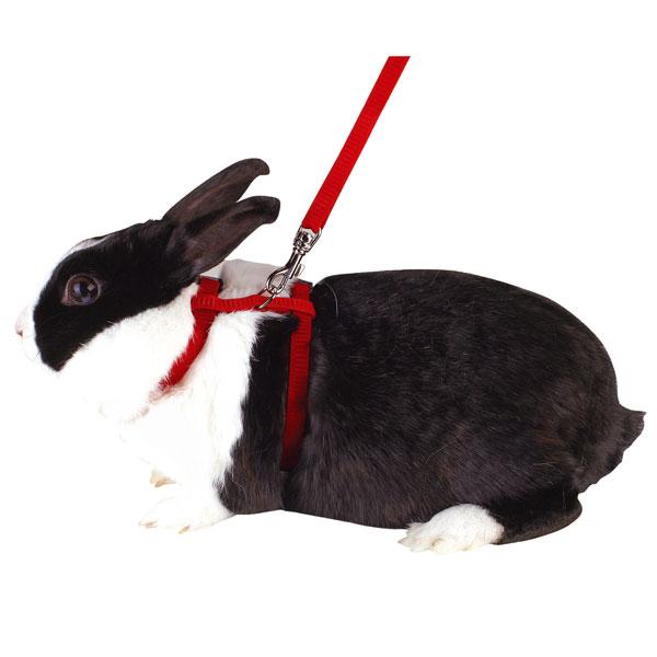konijnentuigje_konijnentuigjes_83969.jpg