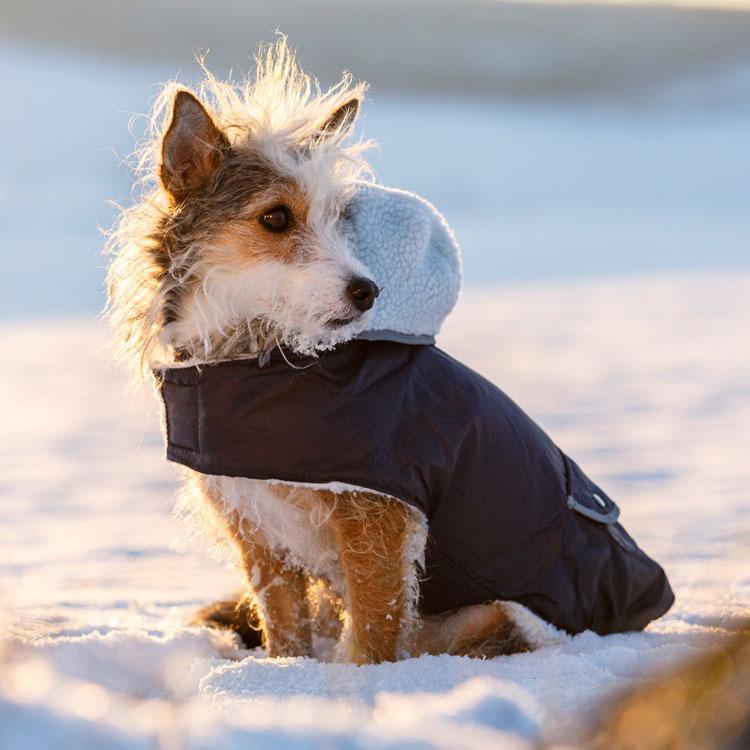 Hondenkleding | Hondenjas Teddy