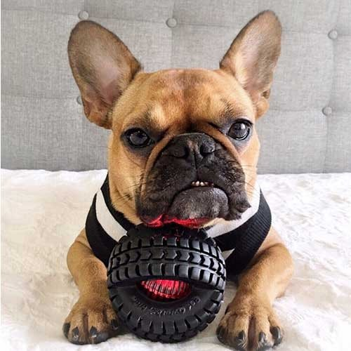 Pet Qwerks Blinky X-Tire Small