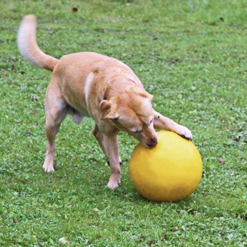 Honden speelbal  Geel | Diameter 30cm.