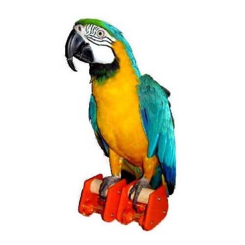 Rolschaatsen voor papegaaien | Zoo-Max