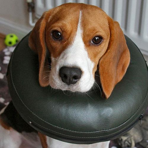 Opblaasbare hondenkraag Comfy Collar | handige Klittenband sluiting