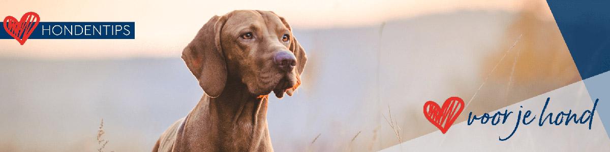 Hondenblog De Huisdiersuper